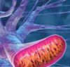 New_work_05_mitochondria